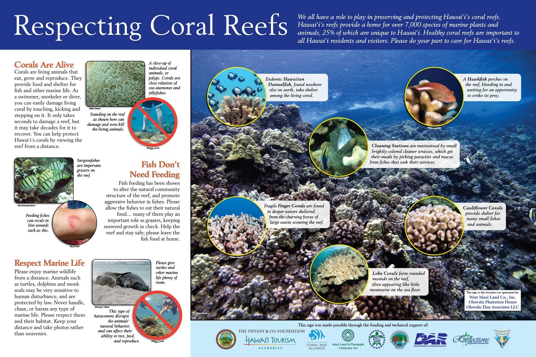 Camp Olowalu Reef Etiquette